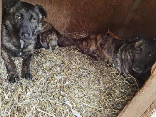 Oscar en Africa twee lieve hondjes