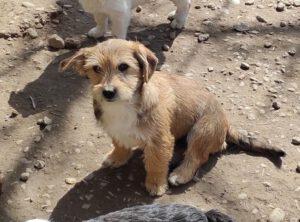 Puppy Oskar
