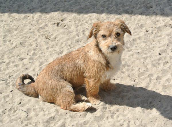 Oskar kleine pup