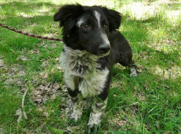 Kleine Kramer rustig hondje