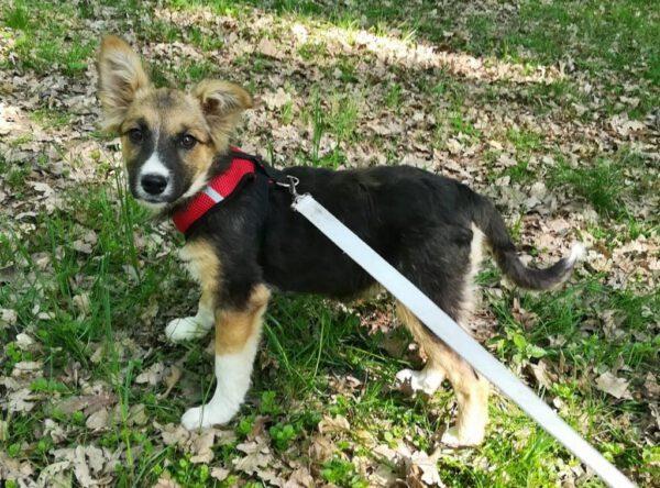 Pup Patty mooi hondje