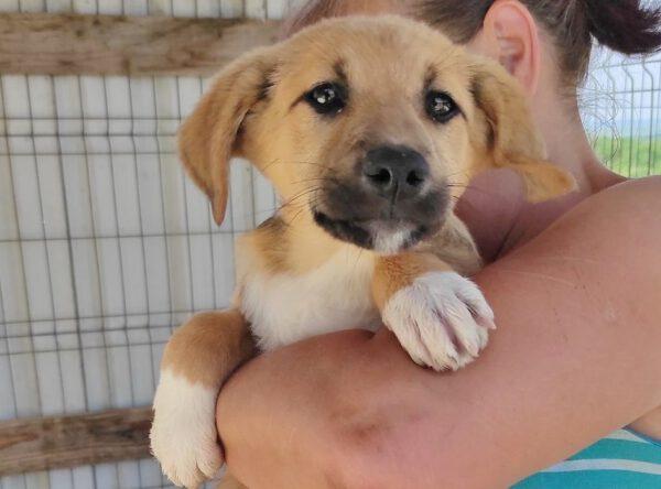 Puppy Ilda