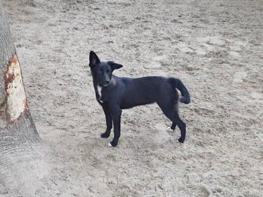 Lilly mooi zwart hondje
