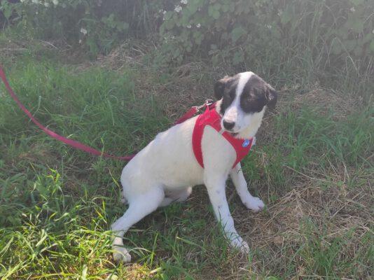 Loretta zwart-wit pupje