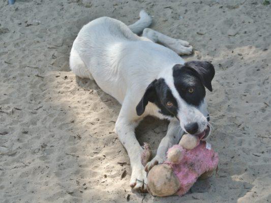Hond Loretta met speeltje