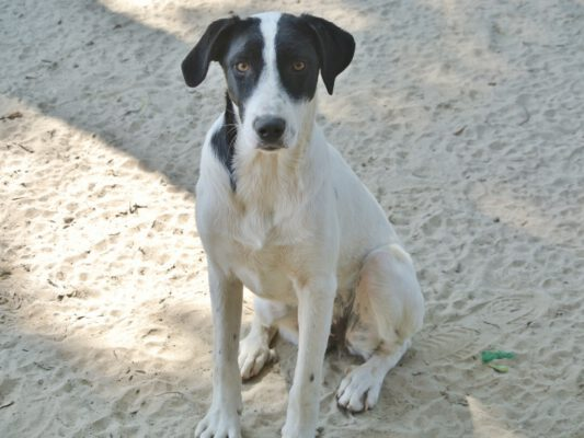 Hond Loretta mooi zitten