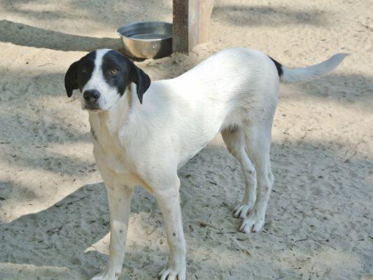Loretta jonge hond