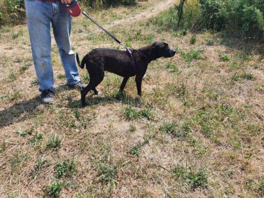 Artemis jonge hond