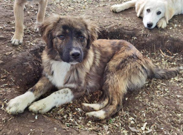 Pup Augustus in het asiel