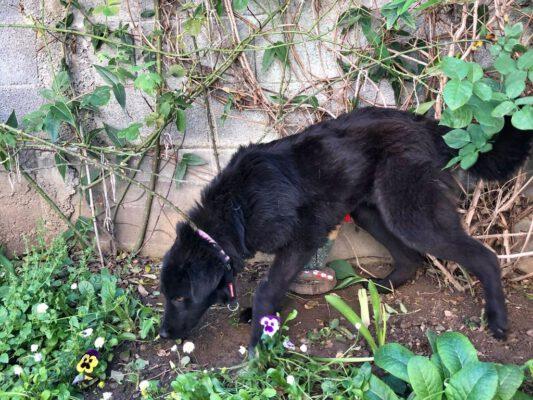 Cleo mooie zwarte hond