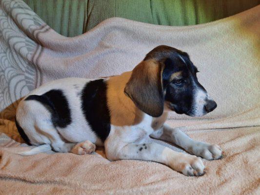 Pup Lili wil een baasje