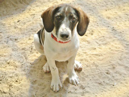 Pup Lili leuk hondje