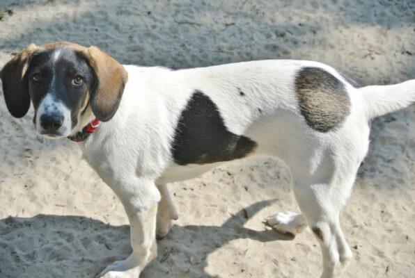 Lili leuk gevlekt hondje