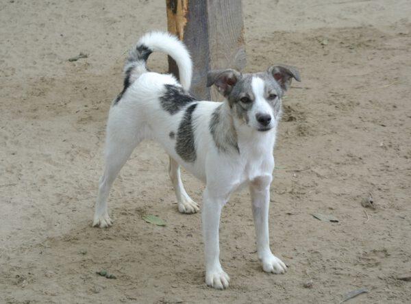 Lolita klein actief hondje