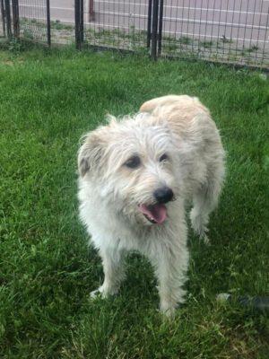 Melly leuke hond uit Roemeni
