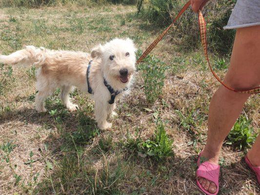 Rosie klein hondje ter adoptie