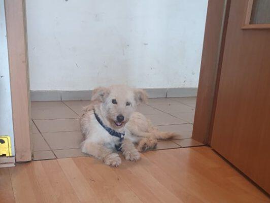 Rosie klein hondje