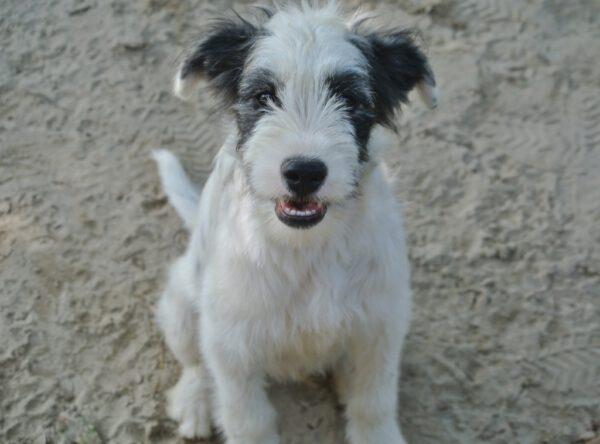 Puppy Walden