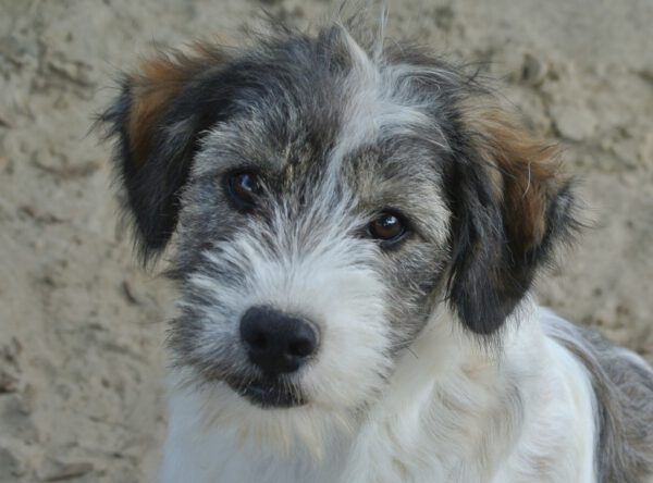 Puppy Wanda schattig hondje