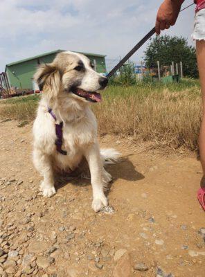 Wanessa schat van een hond