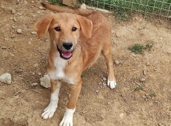 Pup Ada vrolijk hondje