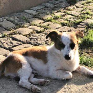 Hondje Aiden in het zonnetje