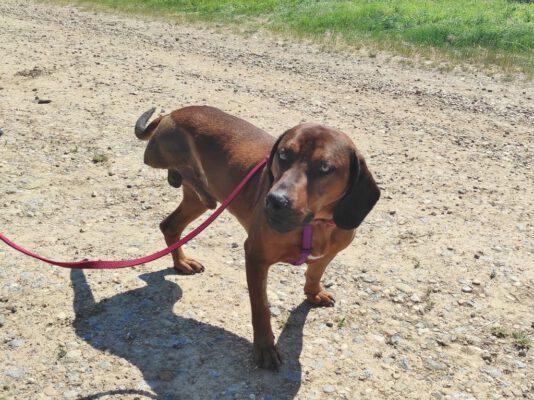 Bruno gehandicapte hond