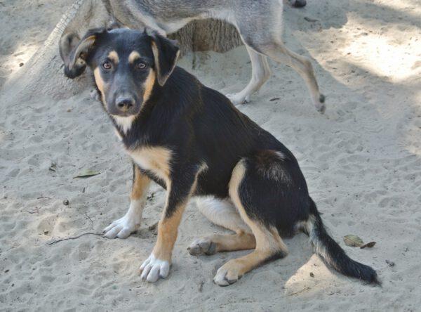 Pup Doina tricolor vacht