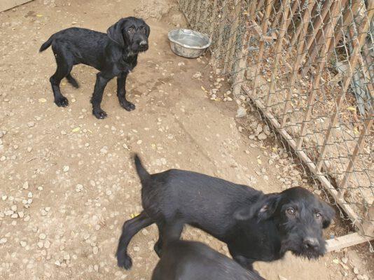 N-pups in de kennel buiten