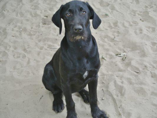 Pup Nina zwarte kruising