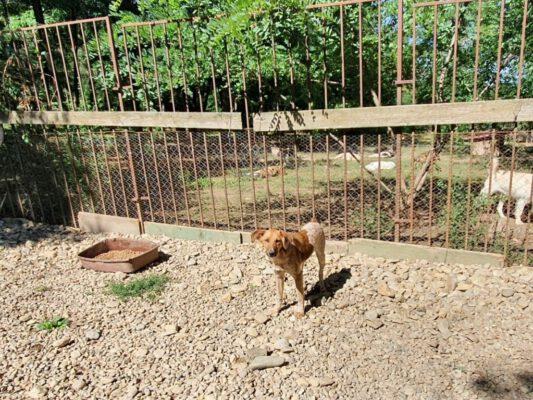 Pup Amay in het verblijf in het asiel