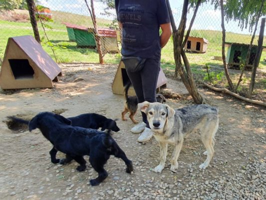 Malko met de andere hondjes in de kennel