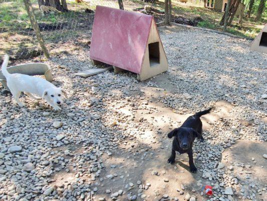 Puppy Afra in het asiel
