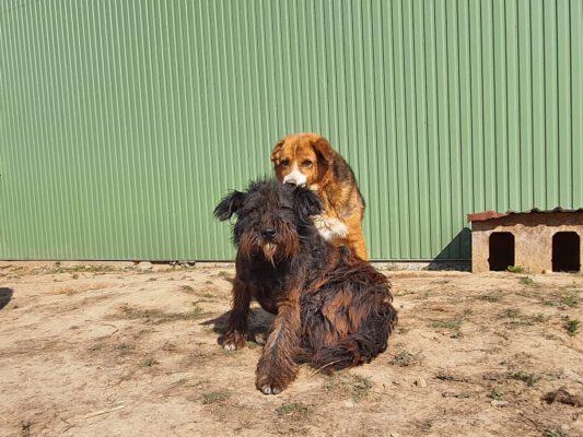Hond Nicole verdient een beter leven