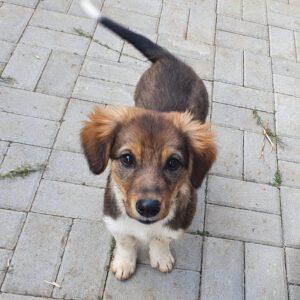 Puppy Rudi